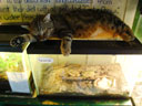 """cat sitting on tarantula and poison dart frogs cages, Colorado Gator Farm"", Mosca, Colorado, 2010"