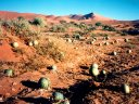 melons, Sossusvlei, Namibia, 1997